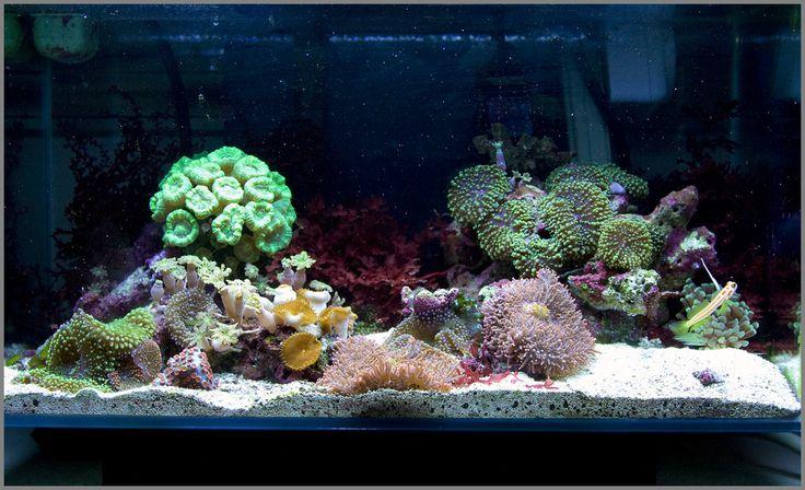 Fluval edge nano reef page 3 nano reef aquariums for Aquarium recifal nano