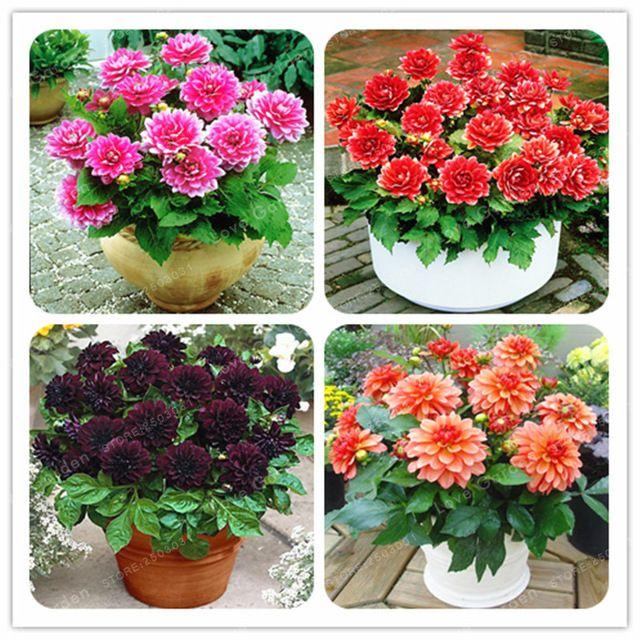 Pin On Dzialka Kwiaty3 Yunhong Store
