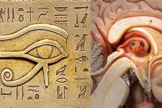 Humans are bestowed with a certain part of their brain known as the pineal gland or also known as our third eye. The reason as to why it is called pineal is for it's shape, like a pine cone.
