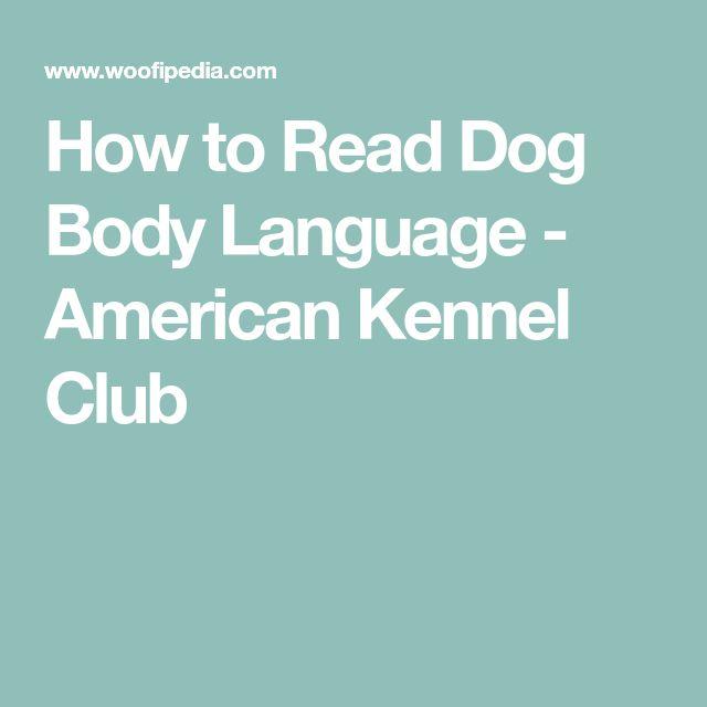 How to Read Dog Body Language - American Kennel Club