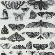 kelebek butterfly dövme modelleri dövme desenleri tattoo desing