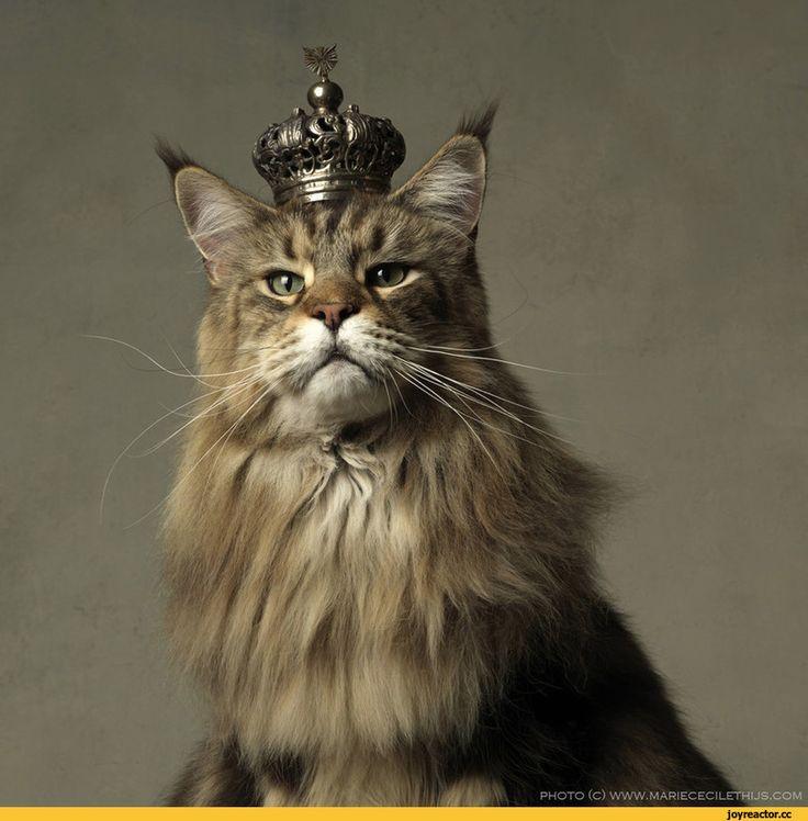 нет этот рисунок на голове кошки фото женской стрижки