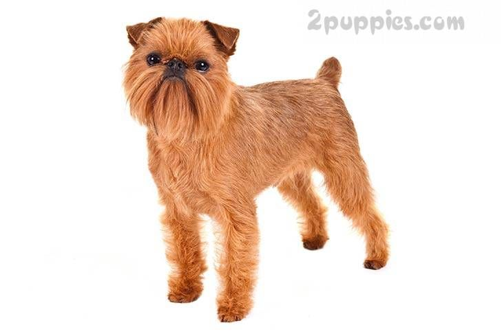 Dogs Puppies For Sale Buy Sell Worldwide Pet Classifieds