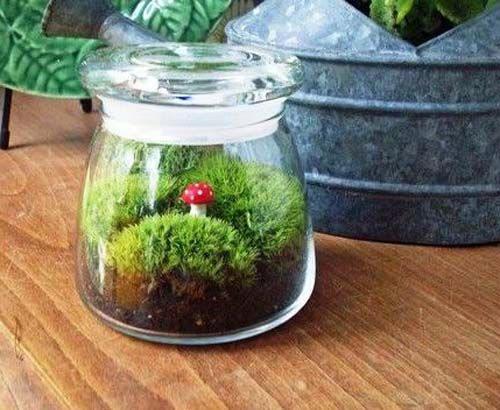 plant in glass home decorate | diy-terrarium-plants-home-decorations-eco-gifts (2)