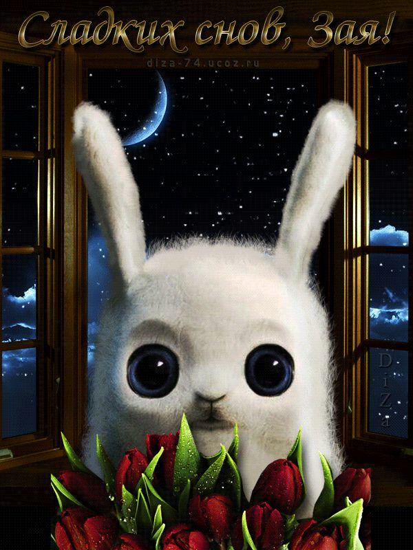 Растения открытки, гифы спокойной ночи любимый зайка