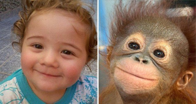 9 Heart-Melting Photos That Prove Animals Can Feel Just As Many Emotions As Kids Can