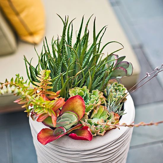 Add a Pop of Color: use colorful succulents to add a pop of color and tie together colors in your outdoor spaces. They can provide a modern, fresh-looking complement to pillows, cushions, and umbrellas