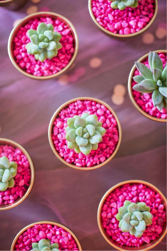 succulents in pots with hot pink rocks