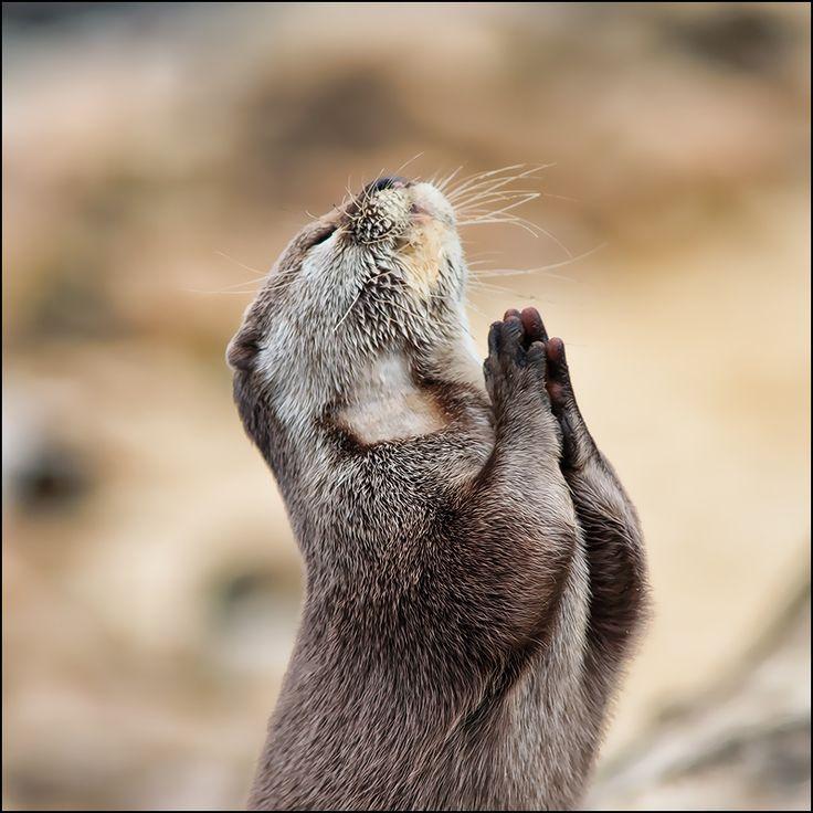 Eat...pray..love: Prai The Lord, Prayer, Dear God, Funny Pictures, Fish, Deargod, Photo, Sea Otters, Animal