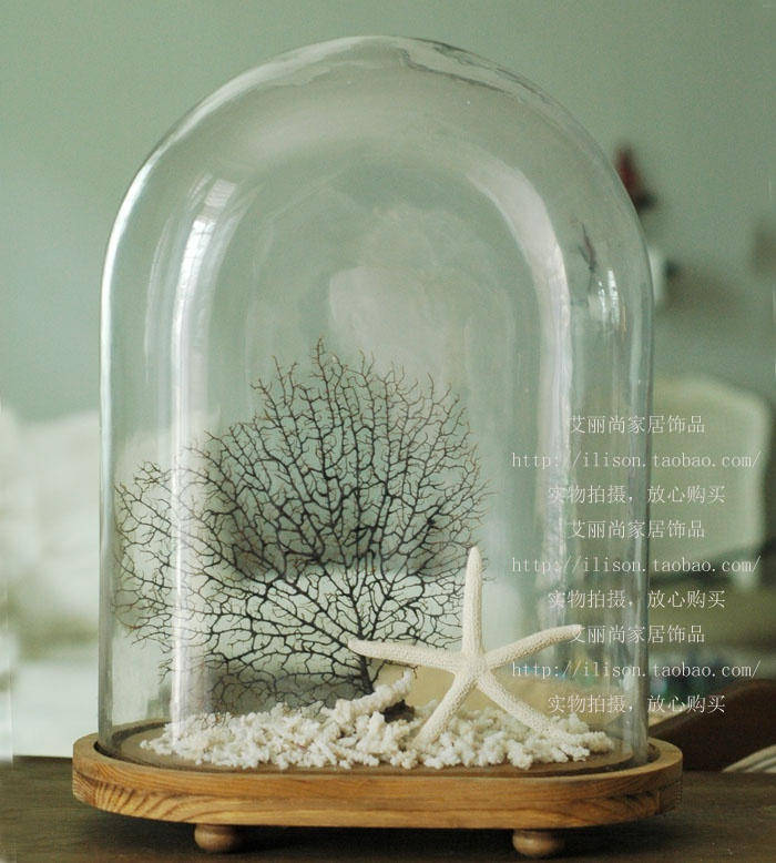 glass dome w/ STARFISH, pebbles, SEA FAN