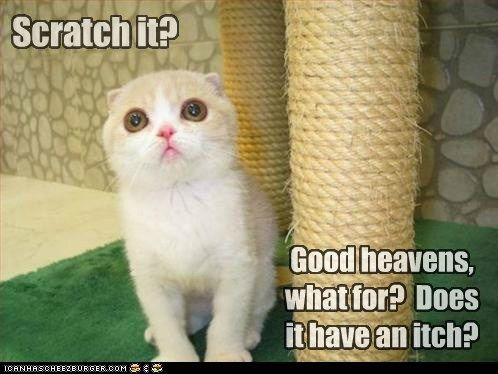 Can Has Cheezburger? - scratching post - Lolcats n Funny Pictures ...