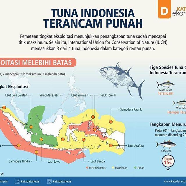 [Infografik] Tuna Indonesia Terancam Punah  KATADATA - Spesies tuna di perairan Indonesia dalam ancaman. Hal itu ditunjukkan dari tingkat eksploitasi yang sudah mencapai titik maksimum di sebagian besar laut Nusantara. Gejala kepunahan juga ditandai dengan masuknya tiga spesies tuna di Indonesia ke dalam daftar merah sebuah lembaga kajian di bidang lingkungan, International Union for Concervation of Nature (IUCN). Kerentanan stok tuna nasional juga tertuang  dalam laporan Indian Ocean Tuna…
