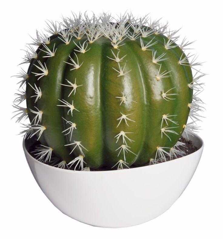 les 25 meilleures id es de la cat gorie grand cactus sur. Black Bedroom Furniture Sets. Home Design Ideas