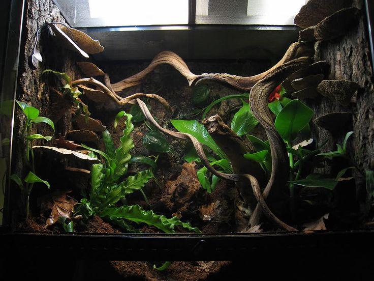 17 Best Images About Terra On Pinterest Python Leopard