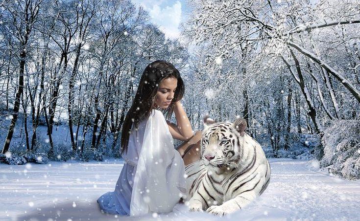 Nő, Tigris, Hó, Tél, Természet