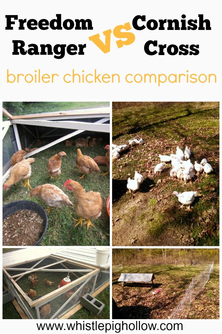 3238 best chickens images on pinterest chicken coops backyard