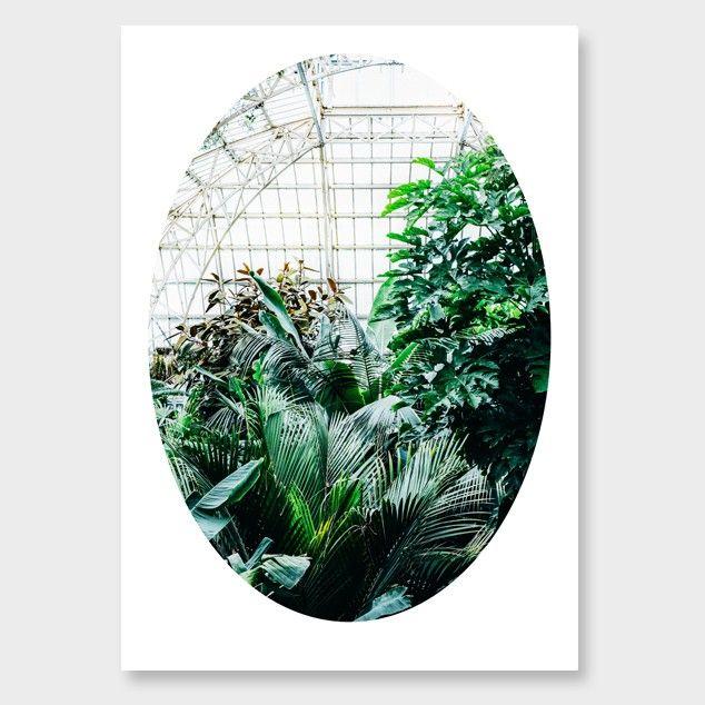 Urban Botanicals No1 Photographic Print by Amy Wybrow