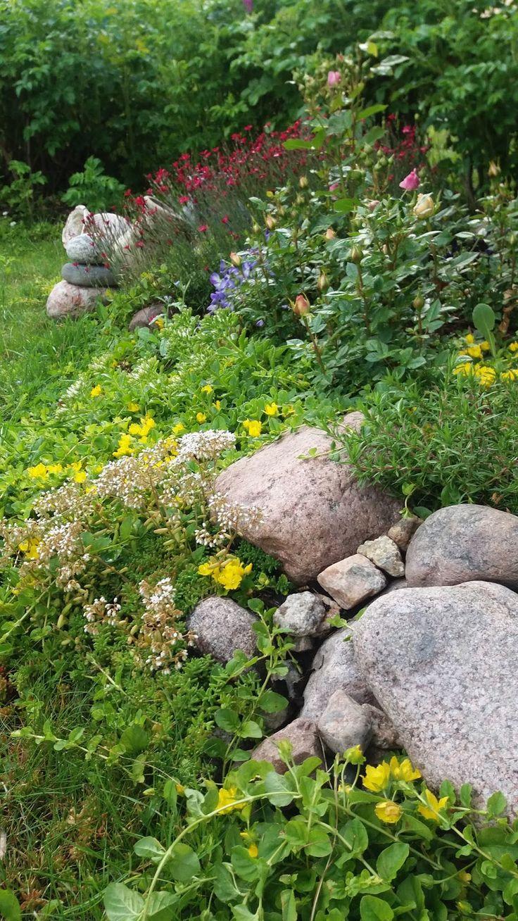 Aamun kuva on kuulas  luonto kypsyneen vihreä  Kasteen viileys kipristelee   ....ei jaloissani ole vikaa  ei sinunkaan  ....kivi on ...