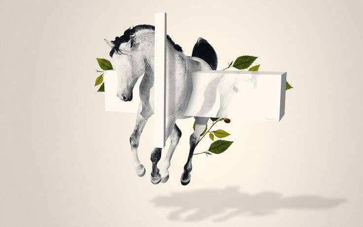takeshi horse