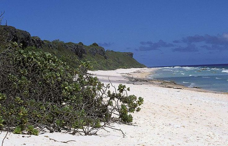 A view along the northern beach on Henderson Island showing Tournefortia argentea growing along the edge of the beach, Pitcairn Islands