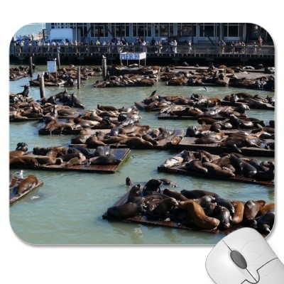 The seals at Pier 39 in Frisco