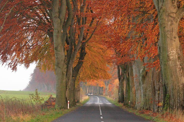 autumn alley by Adam Konieczny on 500px