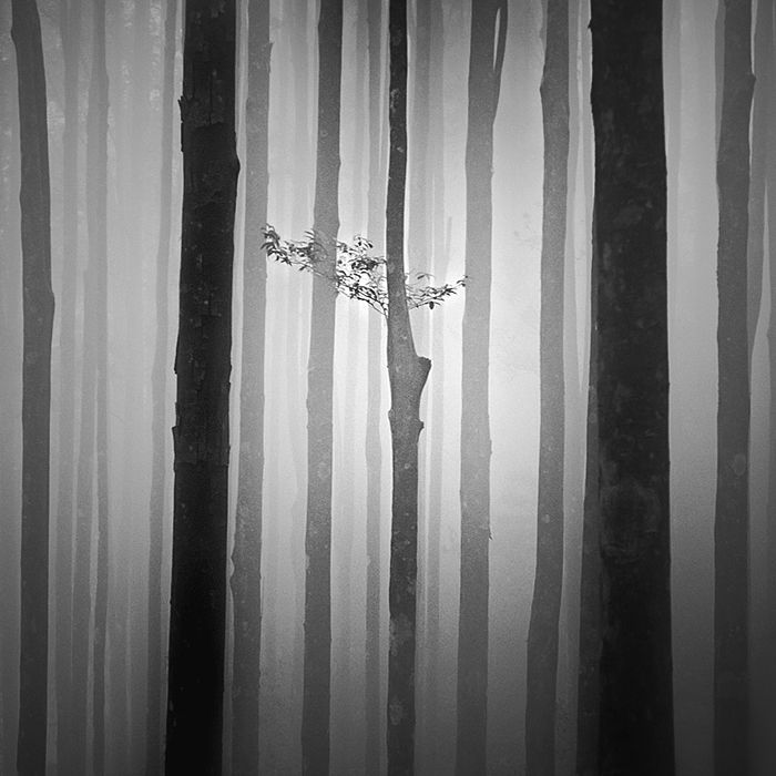 Mute, photography by Hengki Koentjoro. In Nature, Vegetal, Tree, forest. Mute, photography by Hengki Koentjoro.