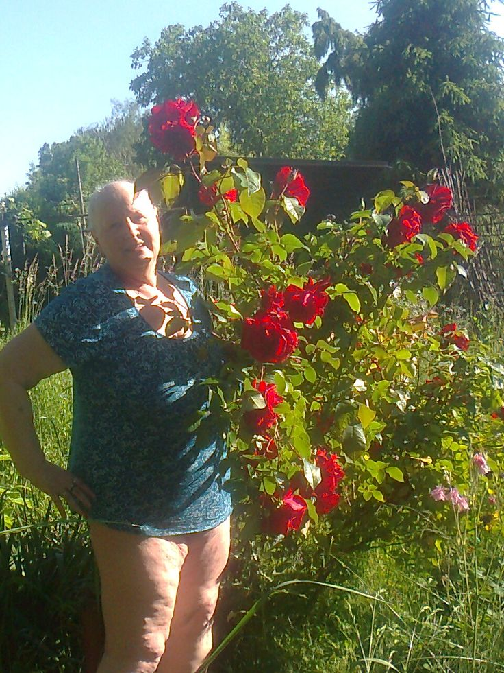 růže vysoká a voňavá