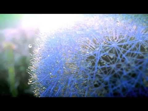 Into the Wind - Miten & Deva Premal - YouTube