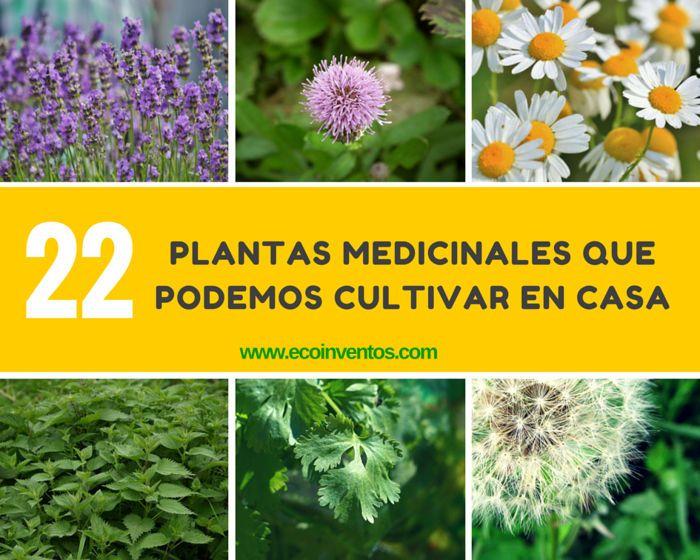 Te mostramos algunos ejemplos de planas medicinales que son realmente fáciles de hacer crecer en tu casa.