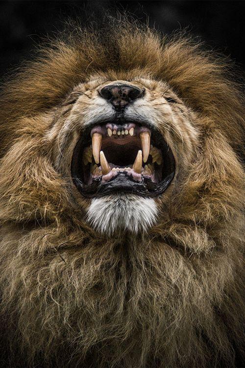 18 animaux qui vous observent dans d'admirables portraits