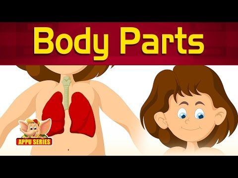 Let's Learn About Human Body Parts - Preschool Learning - YouTube