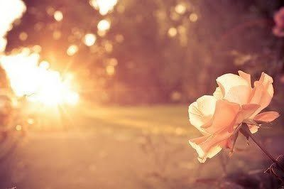 THE SUN WILL RISE AND SET REGARDLESS. WHAT WE CHOOSE TO DO WITH THE LIGHT WHILE IT'S HERE IS UP TO US.~JOUNEY WISELY