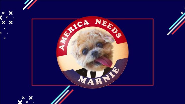 We're bringing you Marnie The Dog, live election updates, and even more pupies on our Election Night coverage starting at 6:50 pm ET on Tuesday.  http://www.mtv.com/news/2950544/2016-presidential-election-guide-polls-predictions-live-updates-results/