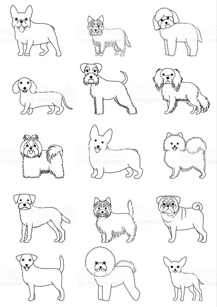 Small Dog Breeds Line Art Set Isolated On White Dog Line Drawing Dog Line Art Animal Line Drawings