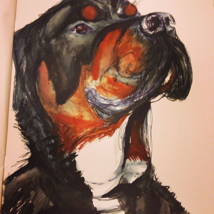 Rottweiler Cyril