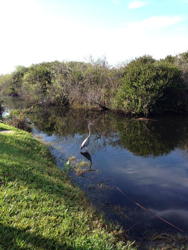 21 Best Everglades U S A Images On Pinterest Everglades