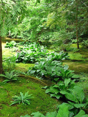 Moss garden, Bloedel Reserve, Bainbridge Island