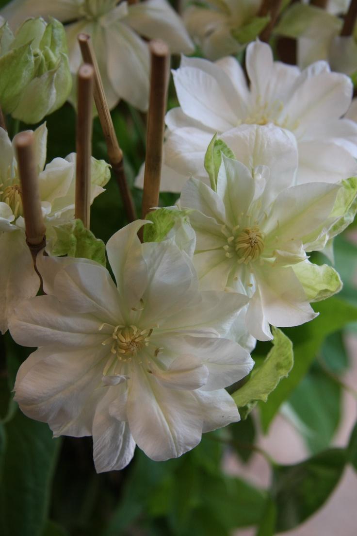 2984 best images about floral on pinterest. Black Bedroom Furniture Sets. Home Design Ideas