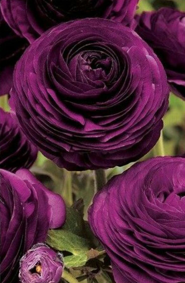 Miss my college days pictures collection free download mobogenie - Shop Mood Board Jewel Tones Flowers