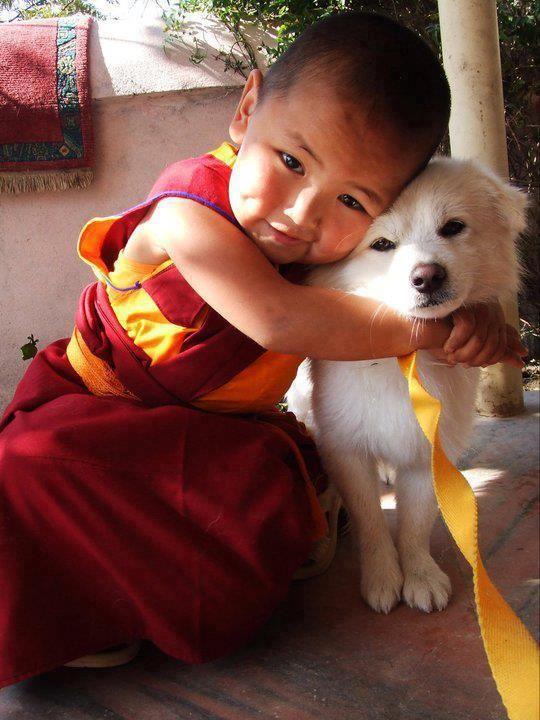 Baby monk and white dog... Can we keep him? Pequeno monge abraçando com carinho um Pet, lindo! Criança sorrindo - riso - sorriso - children - child - smile - oração