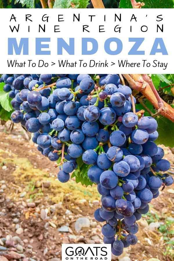 The Best Things To Do In Around Mendoza Argentina Travel