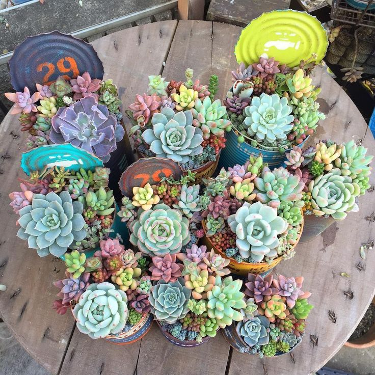 Love these combos of succulents