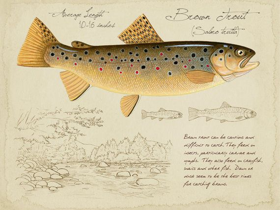 Brown Trout - 9x12 inch limited edition print by Matt Patterson, trout print, fishing art print, cabin decor