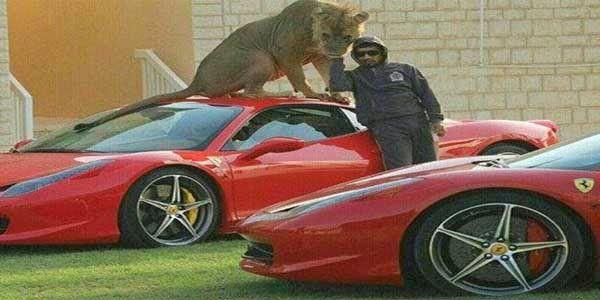 Konyol, Pria Arab Yang Suka Foto Narsis Bareng Singa Dan Mobil Mewahnya