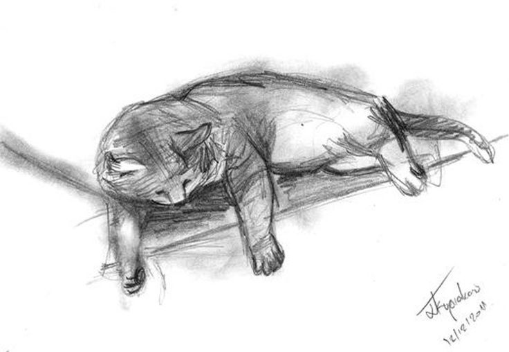 papemoe: sketch your pet or favorite animal A4 size paper for $5, on fiverr.com