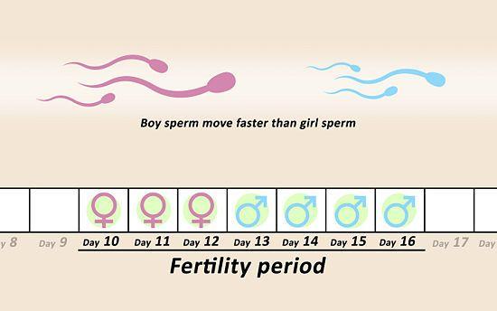 Conceive A Girl  Conception  Embarazarse, Futuro Beb -1362