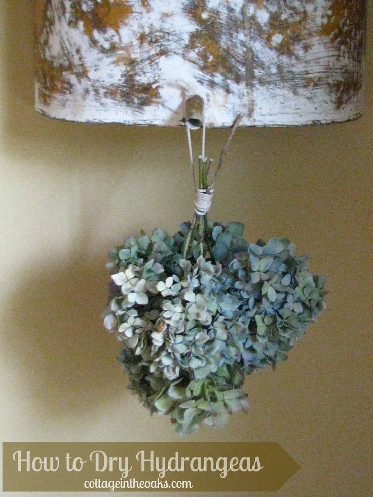 Drying Hydrangeas - I've tried the second method and it mostly works for me.