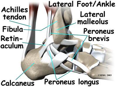 Ankle Anatomy. Colección de La Unidad Especializada en Ortopedia y Traumatología S.A.S www.unidadortopedia.com es una clínica supra especializada enfermedades del sistema osteoarticular y musculotendinoso. Ubicados en Bogotá D.C- Colombia. PBX: 571- 6923370, Móvil +57 300-2597226, 311-2048006.