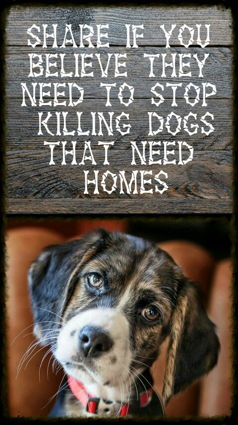 There aren't enough people who adopt animals in shelters, so they get euthanized. Very, very sad. PLEASE CONSIDER ADOPTION ♥